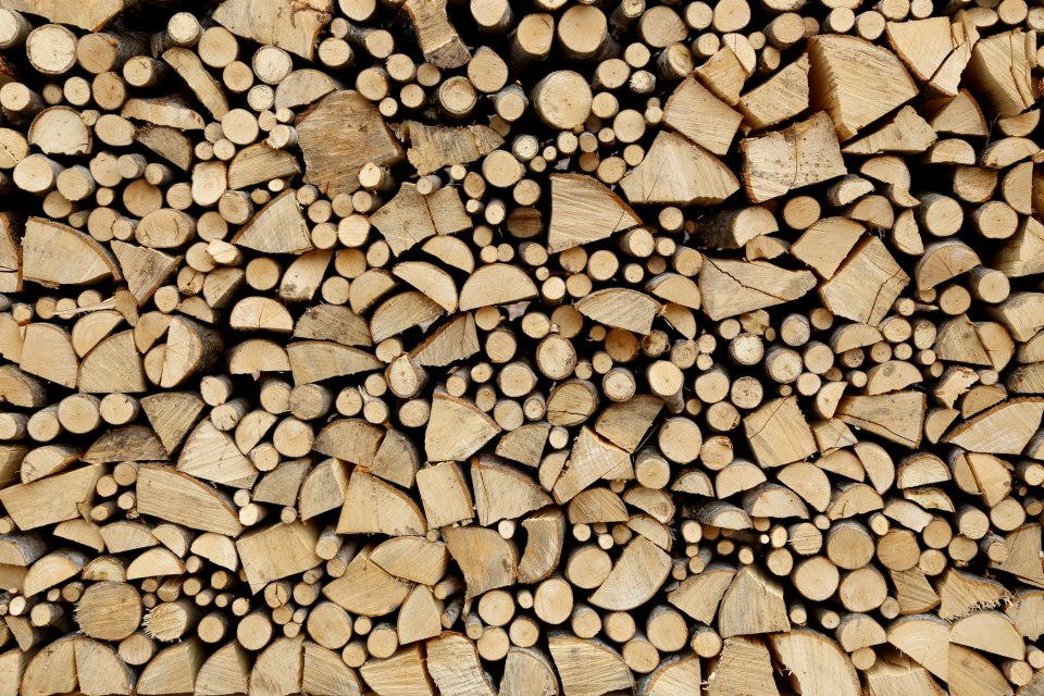 My neighbor's woodpile.