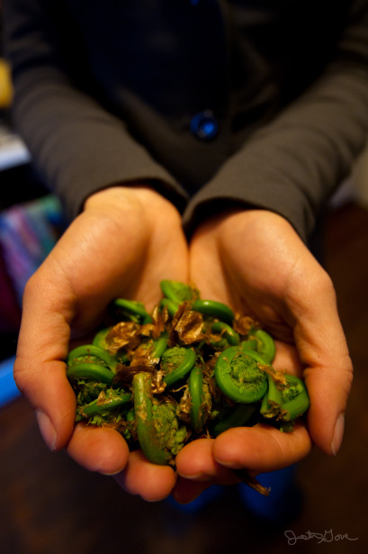 Fiddleheads by the handful