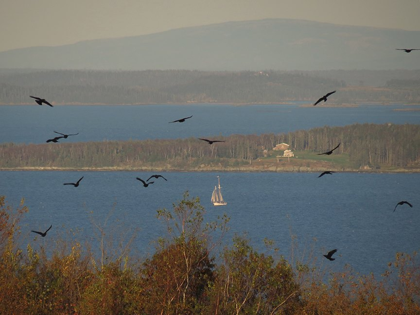Fifteen crows (Beech Hill Preserve, 09 October 2013)