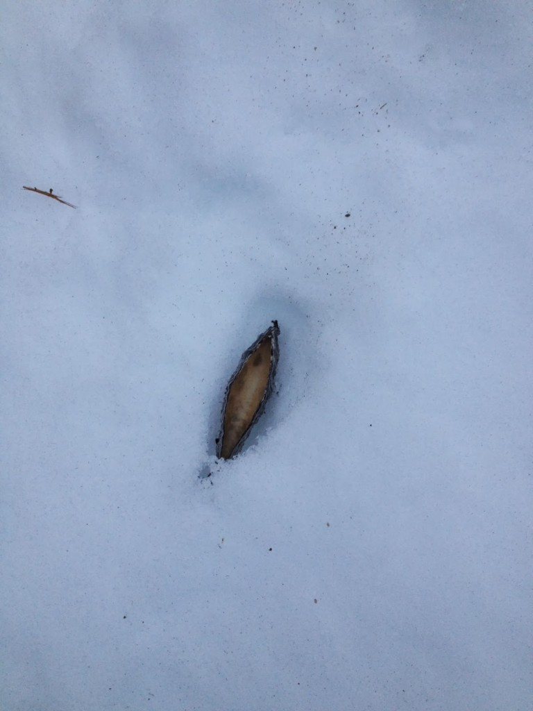 found in a snow drift