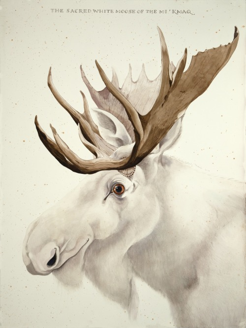 "The Sacred White Moose of the Mi'Kmaq, 2014. Watercolor and gouache on paper, 40"" x 30"""